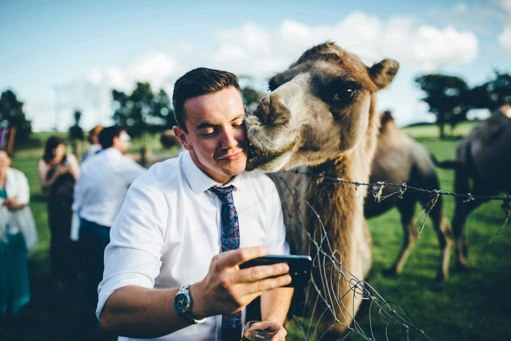 Cornish Camels Wedding Photographer 53
