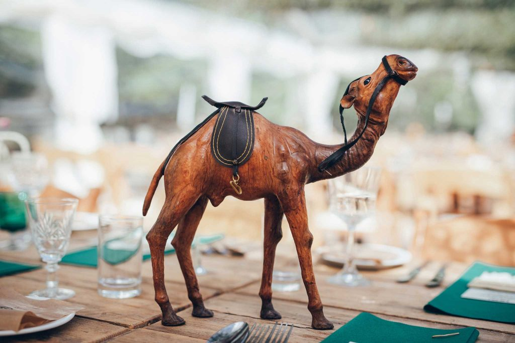 Camel at wedding